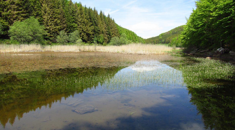 Lago Pratignano - S. Stefanelli